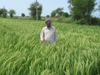 India Direct Seeding Initiative